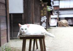 Twitter / nekozamuraiinfo: こんにちは、原案+プロデュースした永森です。「今回は白猫でふてぶてしいのにしよう」と言い出したせいで 現場サイドに多大な労力を強いたようですが、みなさんが喜んでくれていて報われました。 #猫侍 #白猫 Baby Black Cat, Cat Medicine, Cut Cat, Cool Cats, I Love Cats, Crazy Cats, Pretty Cats, Beautiful Cats, Cat Garden