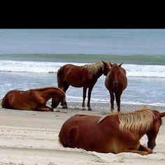 Horses on Corova beach North Carolina just roam around, they're so beautiful !