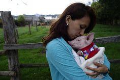 Perla the piglet gets her freedom www.julianasfarm.org
