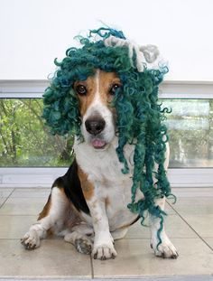 The Knitting Blog By Mr Puffy the Dog