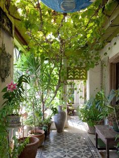 Love this patio/entry, trees, tile floor, lots of potted plants