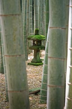 #japan #garden #bamboo