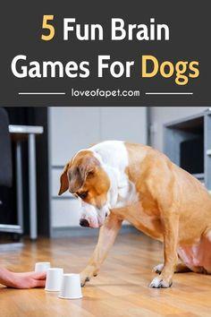 Games For Puppies, Brain Games For Dogs, Dog Games, Baby Puppies, Dog Boredom, Dog Enrichment, Fun Brain, Ideal Brain, Brain Gym