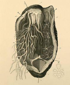 echinodermata a by peacay, via Flickr