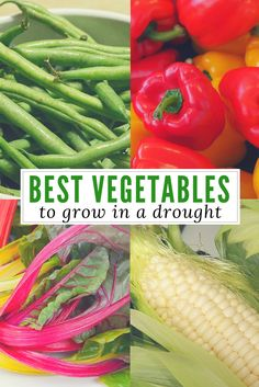 Best Vegetables to Grow in a Drought - A gardener has trouble getting water for her plants. Her solution? Genius! This is especially good advice for when SHTF and resources are low.