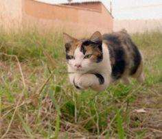 ad2f01adcfbb Kitty Superstar. Hover CatNinja ...