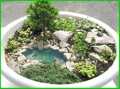 Fairy Garden idea Mini garden with mini pond!