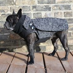 The City Coat for boy French Bulldogs and Pugs - Victorian inspired, a little Sherlock Homes action for your pooch! Dog Coat BabiesAndBeasts.com