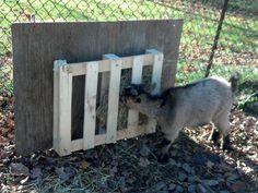 Cheap/Free Hay feeder idea - Goat Management