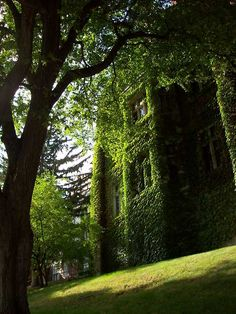 Overgrown vines on castle. Looks ancient and mysterious. And just screams adventure.