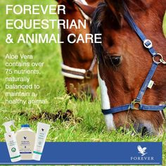 Forever Freedom litre) Forever Freedom contains naturally occurring glucosamine sulphate, chondroitin - which is found naturally in cartilage and joints - and methylsulphonylmethane (MSM). A fast-acting, unique formulation. Forever Freedom, Live Animals, Forever Living Products, Pet Care, Feel Better, Aloe Vera, Equestrian, Acting, Animales