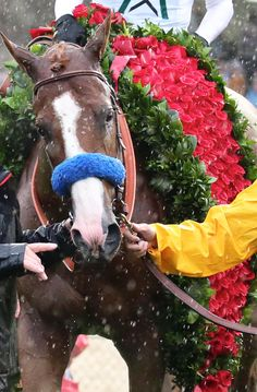 Thoroughbred racehorse, Justify, winner if the 2018 Kentucky Derby. He ran on a very wet, muddy track. All The Pretty Horses, Beautiful Horses, Animals Beautiful, Beautiful Creatures, Derby Horse, Triple Crown Winners, Run For The Roses, Derby Winners, Thoroughbred Horse
