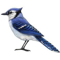 Samolepící dekorace  Modrý ptáček