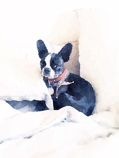 "WATERLOGUE APP The photographer centered this adorable Boston Terrier (named Bea!) in the frame against a light background and used Waterlogue to give it a watercolor-painted look. Pin this to your ""Adorable Puppy Portraits"" board."