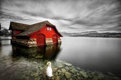 The swan by Liu ziqi