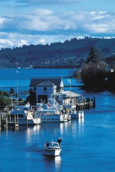 Google Image Result for http://www.greatlaketaupo.com/content/images/41/400x400normal/boat_harbour_taupo.jpg