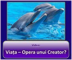 Viața – Opera unui Creator? Vă rugăm să vizionaţi clipul video:  https://www.jw.org/ro/publicatii/materiale-video/#mediaitems/AllVideos/pub-imv_M_1_VIDEO. Apoi citiţi broşura: https://www.jw.org/ro/publicatii/carti/viata-opera-unui-creator/. (Life - Work of a Creator? Please watch the video, then read the brochure.)