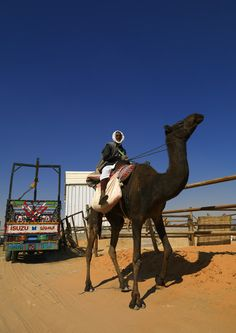 Rashaida in Riyadh camel market - Saudi Arabia   Rashaidas men take care of the camels in the Riyadh market. Those men live along the red sea in Sudan (see their wifes in my stream). They also work in Dubai and KSA for rich people.  © Eric Lafforgue