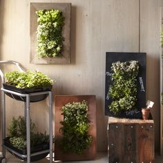 Reclaimed Wood Wall Planter - like the cart, could be made from PVC Vertical Wall Planters, Vertical Gardens, Wood Ideas, Logs, Carpentry, Barn Wood, Pipes, Wood Wall, Pallets