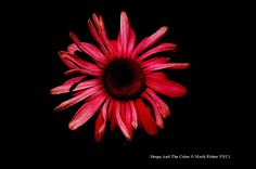 Mark Fisher American Photographer™: Shape And The Color • American Photographer Mark F...