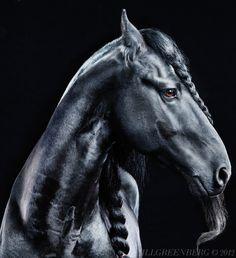 Jill Greenberg - Horses (book)