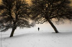 Man walking in surreal winter trough trees shot with a selective focus lens