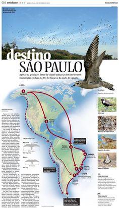 Birds migration routes– Carol Cavaleiro