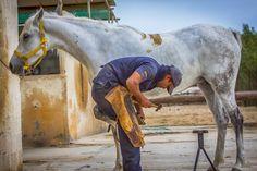 horse shoe maker - null Reno Wilson, Horses, Animals, Animales, Animaux, Animal, Animais, Horse