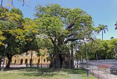O Baobá e o Pequeno Príncipe