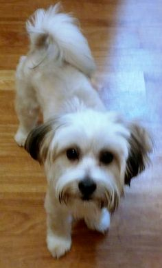1000+ images about Lost Pets in Texas on Pinterest   Lost ...  Pearland