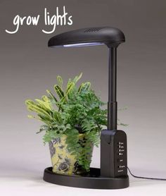 This Type Of Light Stand Is Perfect For Growing African