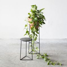 14 suportes para ter plantas dentro de casa                                                                                                                                                     Mais