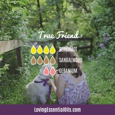 Bergamot Diffuser Blends - Relax and Uplift Your Senses! by Loving Essential Oils | True Friend with bergamot, sandalwood, and geranium essential oil. Get more diffuser blends with bergamot PLUS get a free printable cheat sheet, just visit blog post. #bergamotessentialoil #bergamotdiffuserblends #lovingessentialoils