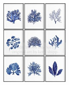blue coral wall set     http://www.etsy.com/listing/69740287/sea-coral-in-denim-print-8x10-sea-life?ref=similar_items_sash