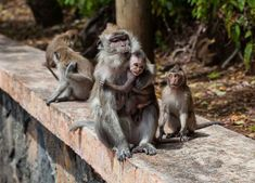 Ubud Monkey Forest Day Trip from Canggu – Enjoyable Tour Monkey Forest, Asia News, Ubud, King Kong, Day Trip, Dogs, Freedom, Money, Business