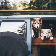 Tag your crew! ⛺️ :@fursty #camp#squad#dogs#dogswhocamp #dogsofinsta #dogswhohike #puppy#camping#hiking#hike#thegreatoutdoors #adventure#outdoors#banff#love#vibes#cozy#nature#forest#lakes#picturesque #canoe #explore #exploreab#explorebc#explorealberta #getoutside  #Regram via @campinglifestyleshots