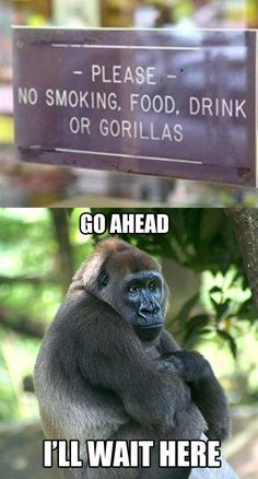 Poor gorillas