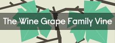 The Wine Grape Family Vine [INFOGRAPHIC] | VinePair