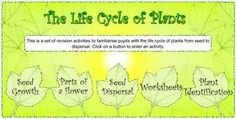 BILINGUAL AL-YUSSANA: THE LIFE CYCLE OF PLANTS