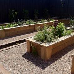 boxed veggie garden