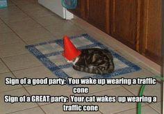 haha.. funny animals