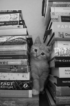 Two of my favorite things: Kitties & Books!