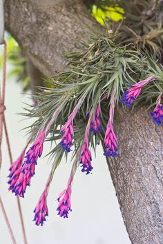 Seeing the expression on kids' faces when they find out that there are such things as air plants is somewhat priceless. Grow your own with the kids.