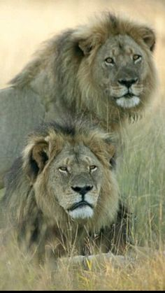 Cecil and his brother