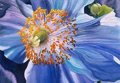 Blue Poppy ~ Marney Ward F5