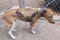 Man Burned Dog Alive For Eating His Chickens! Demand The Maximum Penalty For The Culprit!