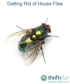 how to get rid of house flies with cloves how to get rid