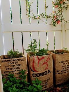 Herbs grown in Stacked Milk Crates, lined w Coffee Bean Bags - garden