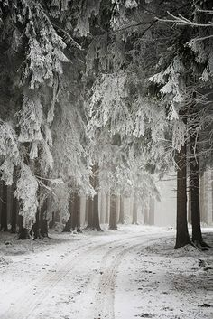 white-snow-landscape. I really like this photo because the trees look there dusted with icing sugar! the trees have lots of texture.