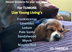 Essential Oils to use for tumors in dogs (and humans) https://www.youngliving.org/gina1028 #